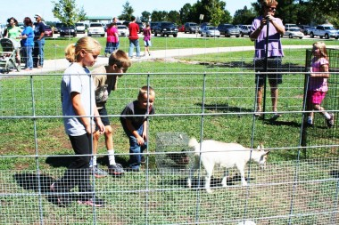 pettng zoo at wild duck festival with kids in goat pen